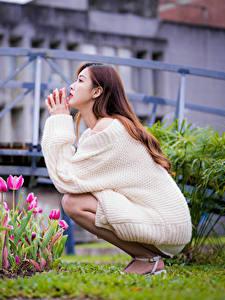 Bilder Asiatische Tulpen Braune Haare Sitzend Sweatshirt Blumen