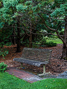 Fotos Australien Park Bank (Möbel) Bäume Mount Lofty Botanic Garden
