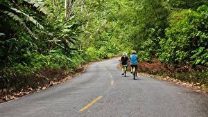 Bilder Straße Wald Asphalt Fahrräder Zwei Bocas Del Toro, Panama Natur