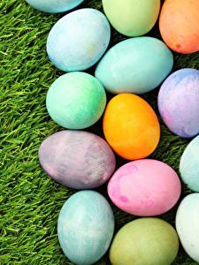 Fotos Feiertage Ostern Gras Ei