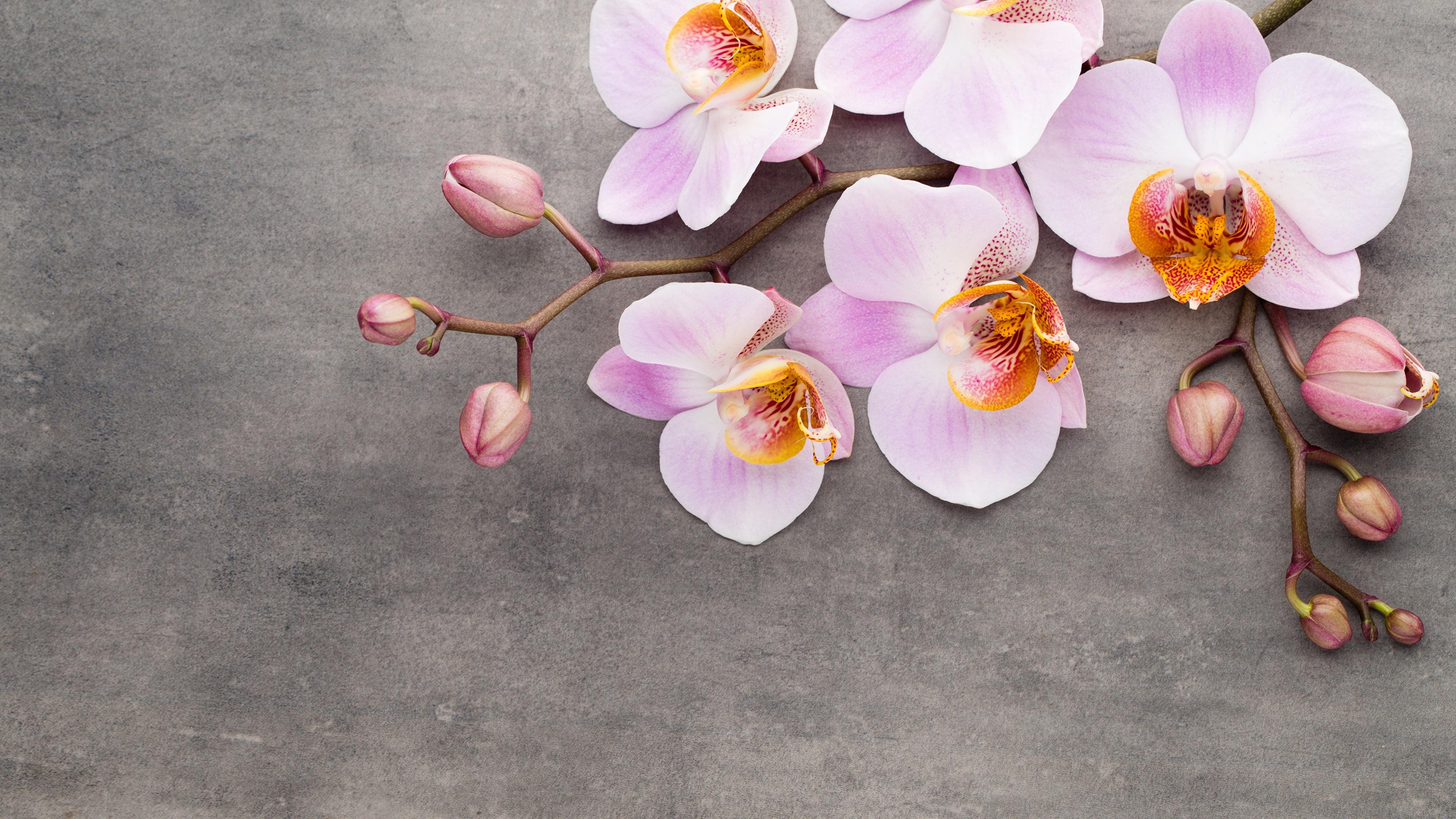 Fonds D Ecran 3840x2160 Orchidees Fleurs Telecharger Photo