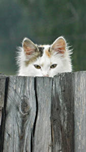 Hintergrundbilder Hauskatze Zaun Hölzern ein Tier