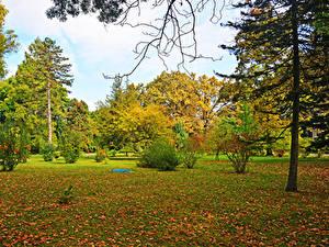 Bilder Ungarn Herbst Parks Bäume Blattwerk Strauch Szeged Natur