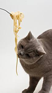 Hintergrundbilder Katze Grauer Hintergrund Makkaroni Tiere