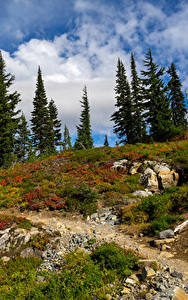 Hintergrundbilder Vereinigte Staaten Park Steine Fichten Gras Mt Rainer National Park Natur