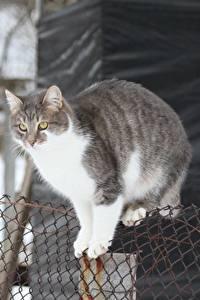 Fotos Katze Zaun Tiere