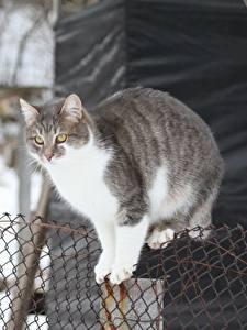 Fotos Hauskatze Zaun Tiere