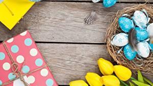 Bilder Tulpen Eier Nest Bretter