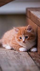 Bilder Hauskatze Kätzchen Fuchsrot Treppe Tiere