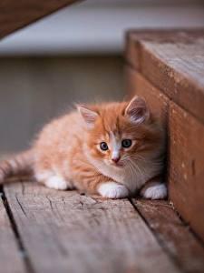 Bilder Hauskatze Kätzchen Fuchsrot Treppe