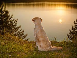 Fotos Hund Golden Retriever Küste Sonnenaufgänge und Sonnenuntergänge