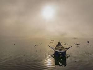 Hintergrundbilder Sonnenaufgänge und Sonnenuntergänge Meer Vögel Boot Möwen Fischerei Nebel