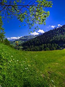 Bilder Schweiz Grünland Alpen Gras Marmorera Graubuenden