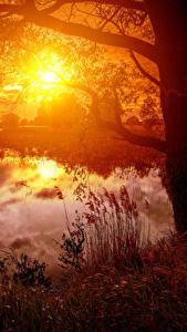 Fotos Landschaftsfotografie Sonnenaufgänge und Sonnenuntergänge Flusse Baumstamm Sonne