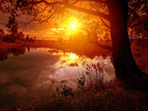 Fotos Landschaftsfotografie Sonnenaufgänge und Sonnenuntergänge Flusse Baumstamm Sonne Natur