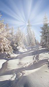 Hintergrundbilder Winter Schnee Lichtstrahl Fichten