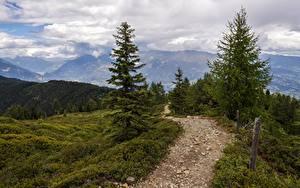 Fotos Gebirge Wälder Landschaftsfotografie Weg Fichten Gras