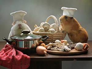 Hintergrundbilder Hausmeerschweinchen Pilze Zwiebel Zucht-Champignon Tisch Zwei Weidenkorb Ein Tier Tiere