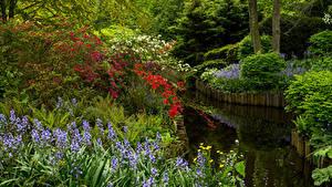 Bilder Niederlande Park Teich Glockenblumen Strauch Keukenhof Gardens