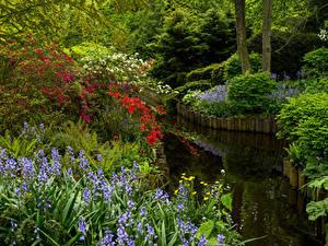 Images Netherlands Parks Pond Campanula Bush Keukenhof Gardens Nature