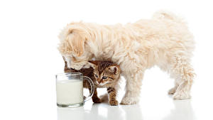 Picture Dogs Cats Milk White background Puppies Kittens Cup Animals
