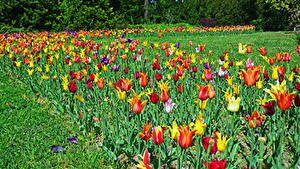 Fotos Ungarn Budapest Park Tulpen Gras Botanical garden Natur
