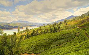 Bilder Sri Lanka Landschaftsfotografie Felder Flusse Nuwara Eliya