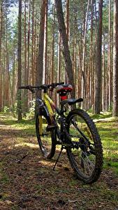 Photo Forests Bicycle Nature