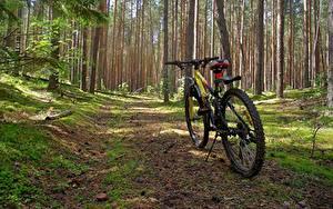 Fotos Wald Fahrrad Natur