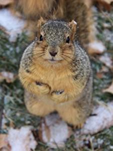 Image Squirrels Glance animal