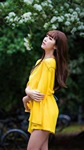 Desktop hintergrundbilder Asiatisches Bokeh Pose Kleid Hand Braune Haare junge Frauen