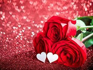 Papéis de parede Rosas Dia dos Namorados Coração Flores