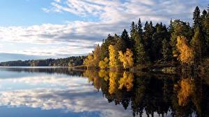 Fotos Wälder Herbst See Schweden Bäume Flaten lake Natur