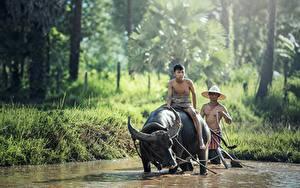 Hintergrundbilder Asiatische Rinder Mann Horn Der Hut Sitzend 2 Tiere