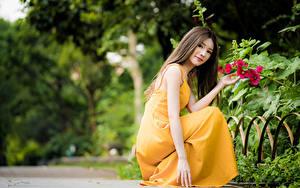 Fotos Asiaten Unscharfer Hintergrund Posiert Sitzt Kleid Hand Braune Haare Niedlich junge frau