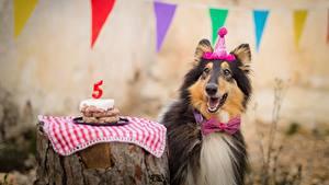 Papéis de parede Cão Aniversário Collie Gravata-borboleta Alegre um animal