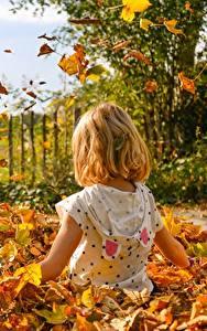 Hintergrundbilder Herbst Blatt Sitzend Kleine Mädchen Kinder