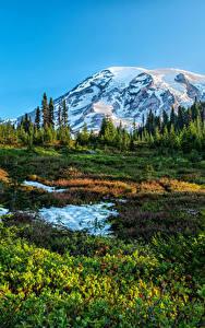 Fotos USA Park Gebirge Washington Schnee Gras Fichten Mount Rainier National Park Natur