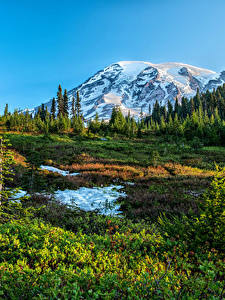 Fotos USA Park Gebirge Washington Schnee Gras Fichten Mount Rainier National Park Natur