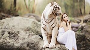 Fotos Steine Tiger Asiatische 2 Braune Haare Sitzt Bengal tiger Tiere