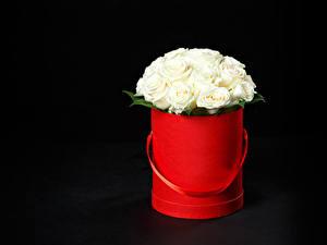 Fotos Sträuße Rosen Schwarzer Hintergrund Weiß Blumen