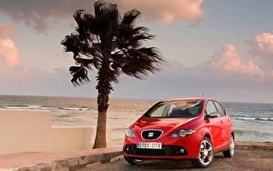 Hintergrundbilder Seat Palmen Rot Metallisch  auto