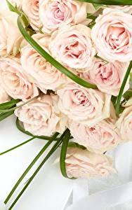 Bilder Rosen Sträuße Rosa Farbe