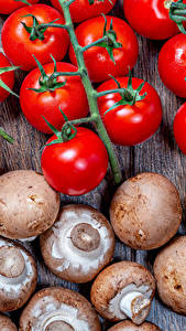 Bilder Tomate Pilze