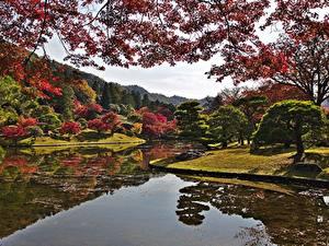 Bilder Kyōto Japan Herbst Park Garten Teich Ast Bäume Natur