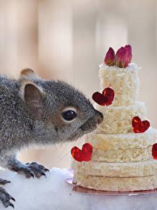 Fotos Hörnchen Süßware Torte Herz Tiere