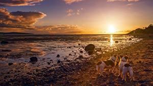 Bilder Morgendämmerung und Sonnenuntergang Himmel Landschaftsfotografie Küste Hund Steine Wolke Natur