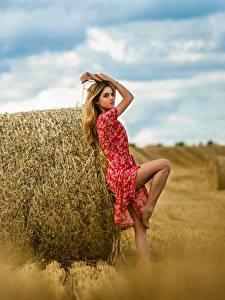 Bilder Felder Heu Kleid Pose Ananda Dmitry Medved Mädchens