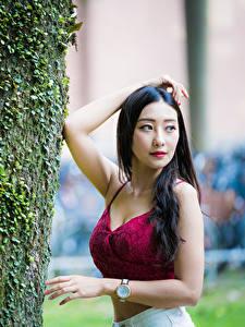 Bilder Asiaten Brünette Posiert Baumstamm Starren Unscharfer Hintergrund junge frau