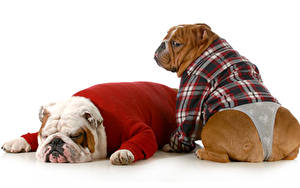 Pictures Dogs Clothes 2 Two Bulldog Uniform Sleep Animal Animals Humor